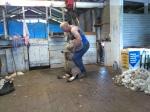 Rob's Shearing