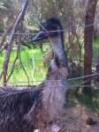 Emu Ridge Eucalyptus Distillery